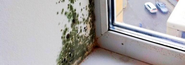 Как избавиться от плесени на стенах в частном доме своими руками